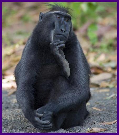 1316703695028-macaco-pensador.jpg