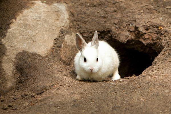[white-rabbit-exiting-rabbit-hole%5B4%5D]