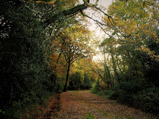 A solitary path with lots of autumn leaves and autumn trees.