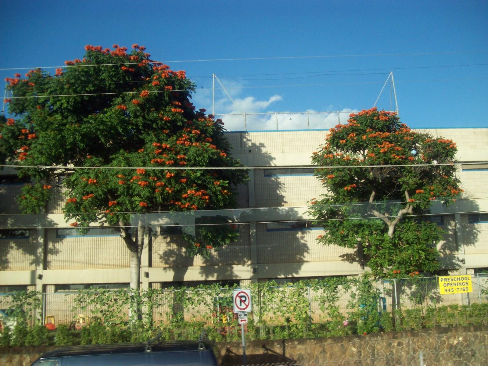 Hawaii Day 3 - 100_7071.JPG
