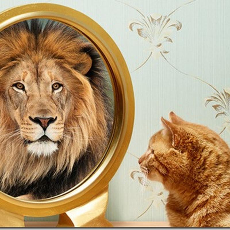Ce este imaginea de sine ?