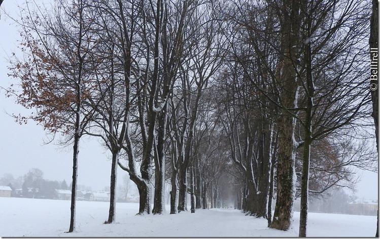 Winterallee1