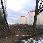 Вырубки ЛЭП в Воронежской Нагорной Дубраве 066.jpg