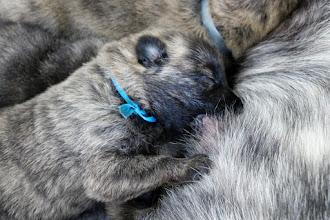Photo: d.blauw aan de tepel