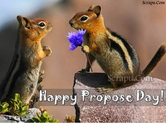 Propose-Day pics Happy Propose Day 8th February