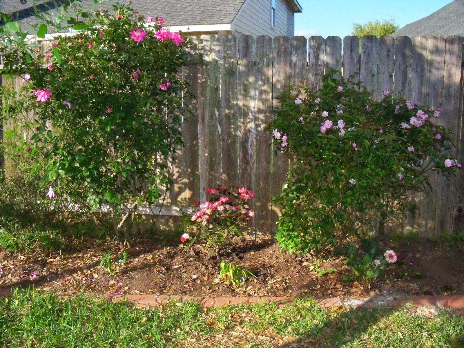 Gardening 2015 - 116_7628.JPG