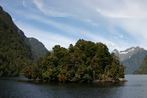 Colourful island in Doubtful Sound