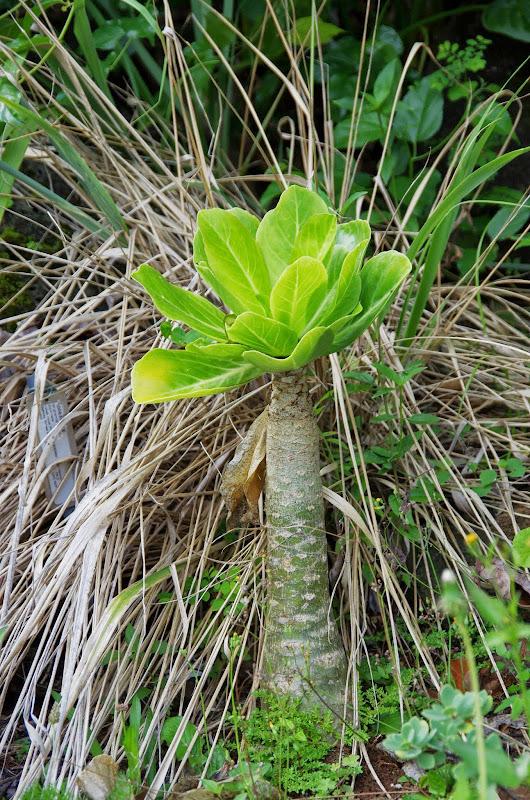 06-26-13 National Tropical Botantial Gardens - IMGP9451.JPG
