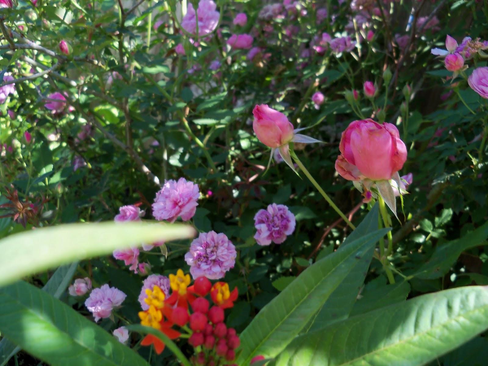 Gardening 2013 - 115_6229.JPG