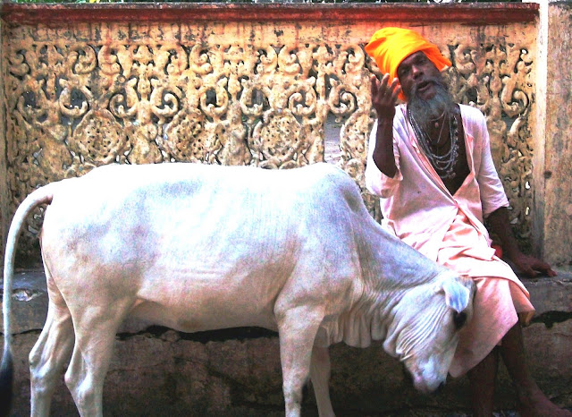A cow in India. From #TeachAbroadBecause ...it's the best of all lifestyles!