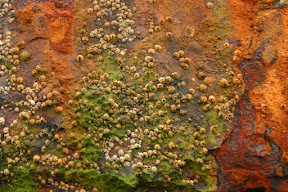 Barnacles and rust