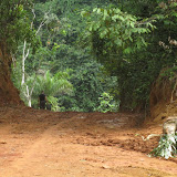 Ankasa Park (Ghana), 23 décembre 2009. Photo : Henrik Bloch