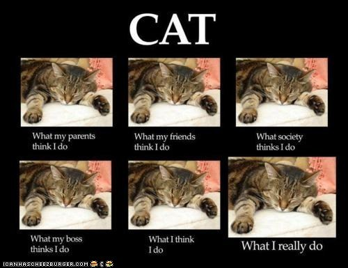 poster of what people think cats do and what they really do