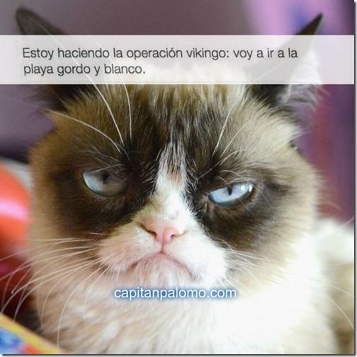 meme del gato gruñon (7)