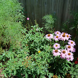 Gardening 2010, Part Three - 101_4467.JPG
