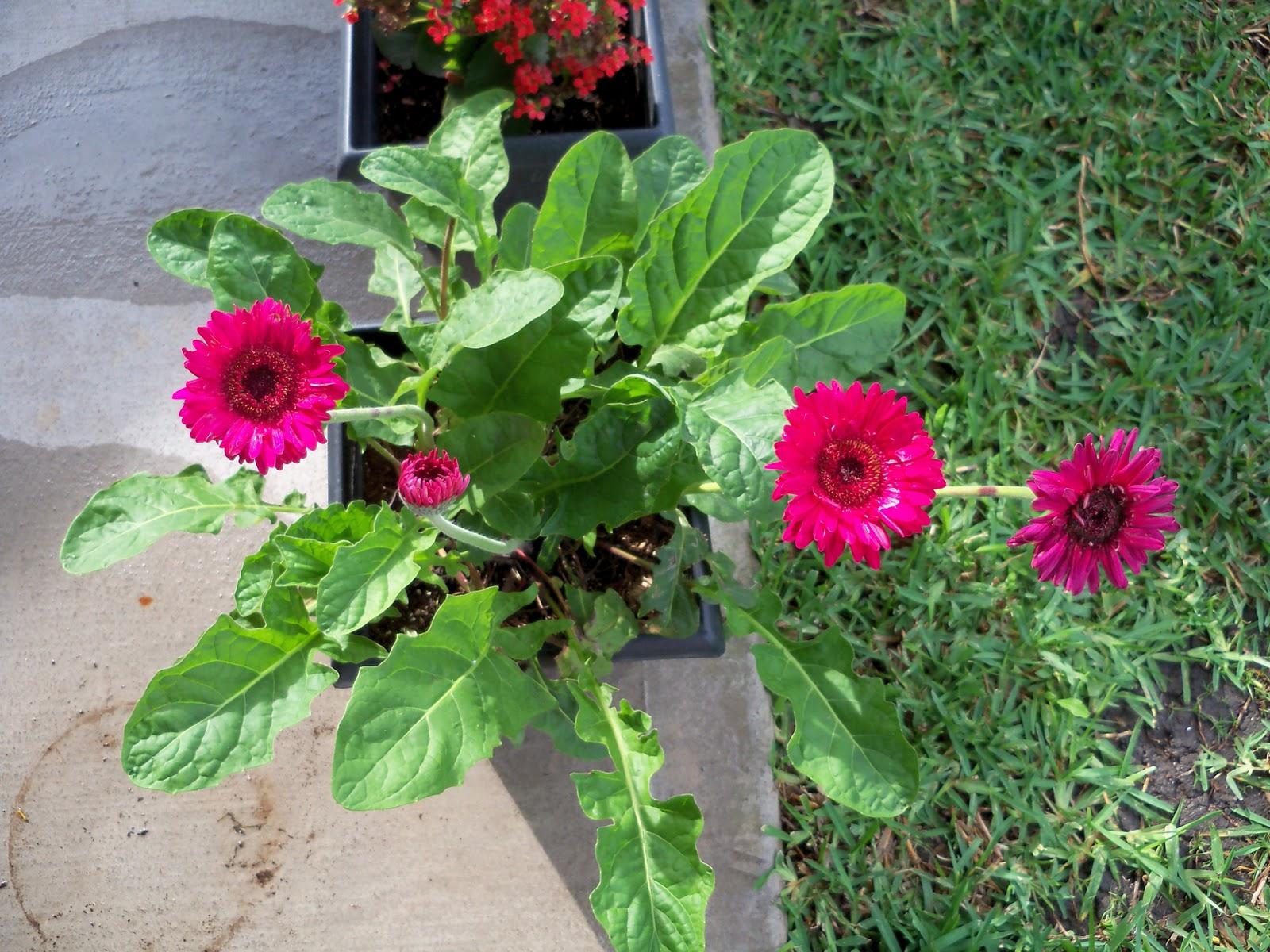 Gardening 2010, Part Two - 101_2305.JPG