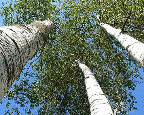 Tại sao thân cây hình trụ?
