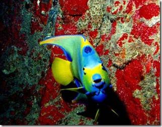 maragogi-arrecifes-3