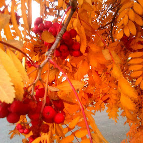 Fall by Dawn Morri Loudermilk - Instagram & Mobile Other (  )