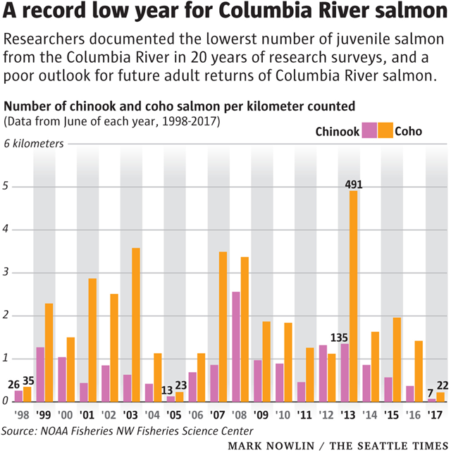 Coho and Chinook salmon returns in the Columbia River, 1998-2017. 2017 was a record-low year for both species. Graphic: Mark Nowlin / The Seattle Times