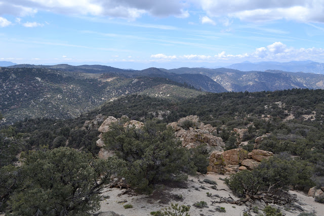 wide ridge covered in pinyon pines