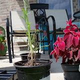 Gardening 2010, Part Three - 101_5134.JPG