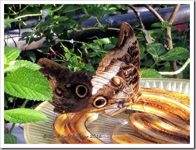 10-22-butterfly2