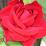 maritza cortes's profile photo