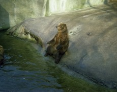 1981.02.01-013-01 ours brun