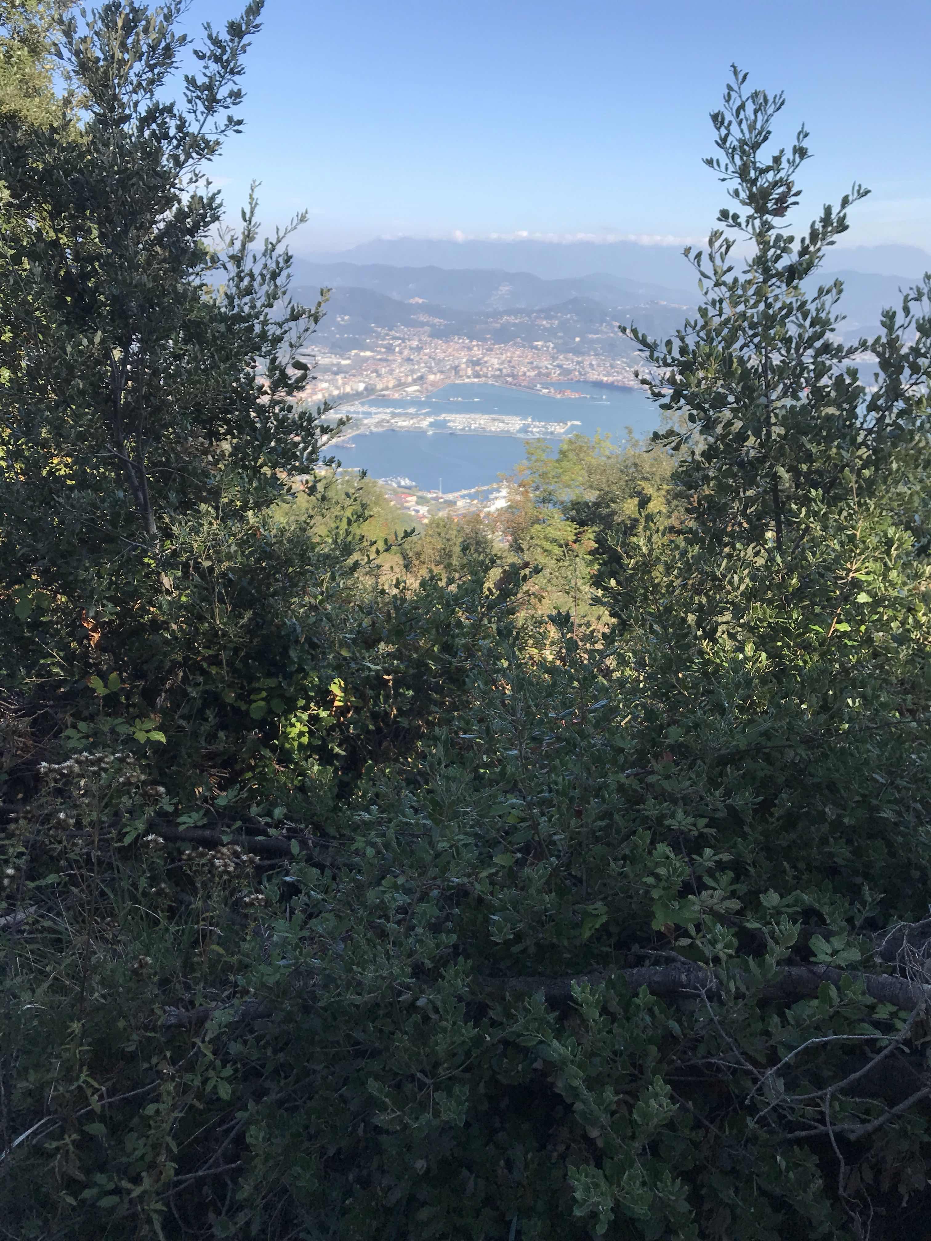 La Spezia through trees