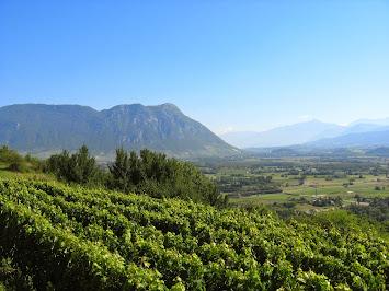 Vignoble et Mont Blanc