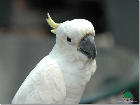 animals_parrots_007_1024x768