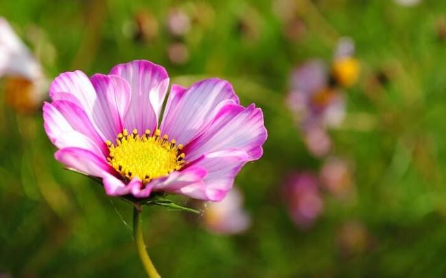 Laidley Florist: Popular Flowers From Australia