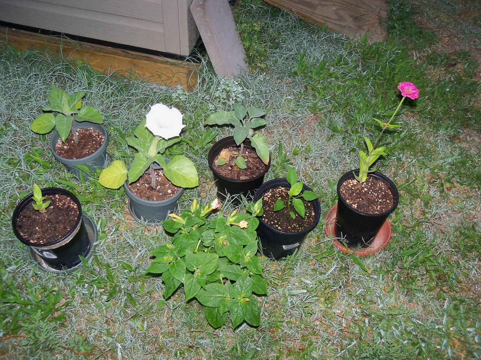 Gardening 2012 - 115_1787.JPG