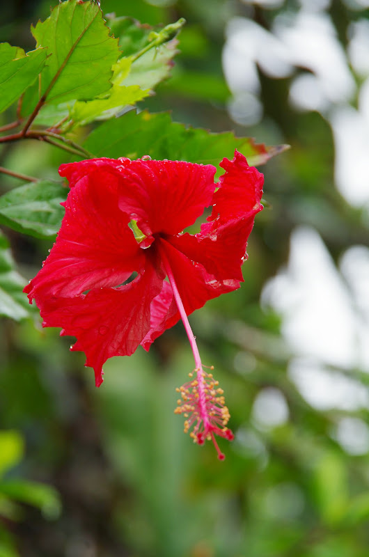 06-23-13 Big Island Waterfalls, Travel to Kauai - IMGP8845.JPG