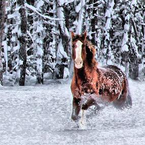 by Anita Atta - Animals Horses