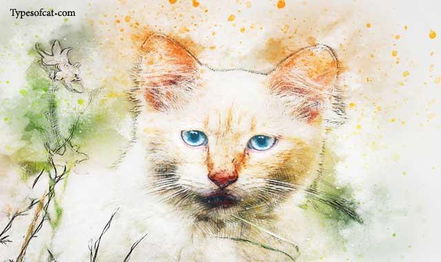 Cat Breeds- An Insight