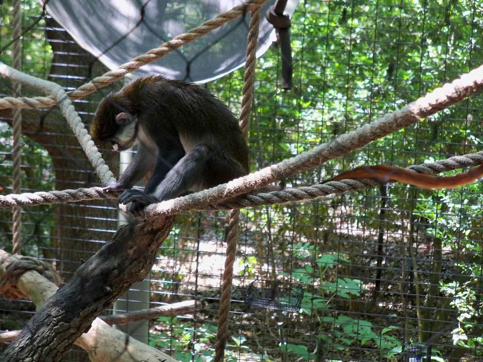 Houston Zoo - 116_8478.JPG