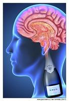 krug-brain