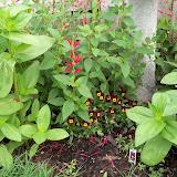 Gardening 2011 - 100_7615.JPG