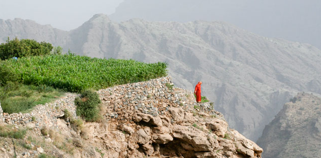 Oman - Al Jabal Al Akhdar farms