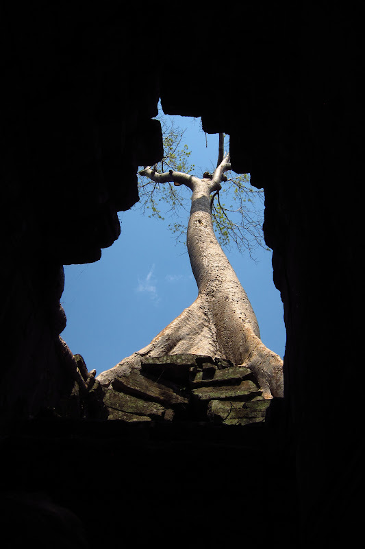 Tree through a hole at Preah Khan