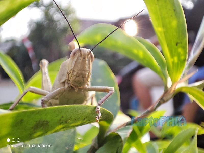 Hasil Foto Kamera Macro Poco F3