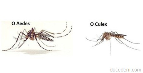 mosquitos (1)