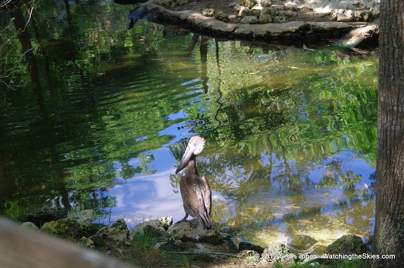 04-07-12 Homosassa Springs State Park - IMGP0054.JPG