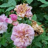 Gardening 2014 - 116_1825.JPG