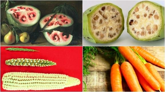 Các loại củ quả trước khi được thuần hóa trông như thế nào?