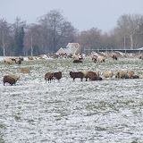 Winterkiekjes Servicetv - Ingezonden%2Bwinterfoto%2527s%2B2011-2012_69.jpg