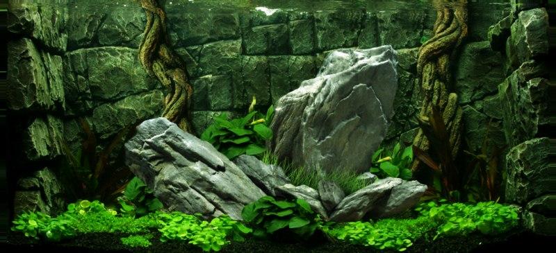 phông nền hồ cá rồng, phong nen ho ca canh 17