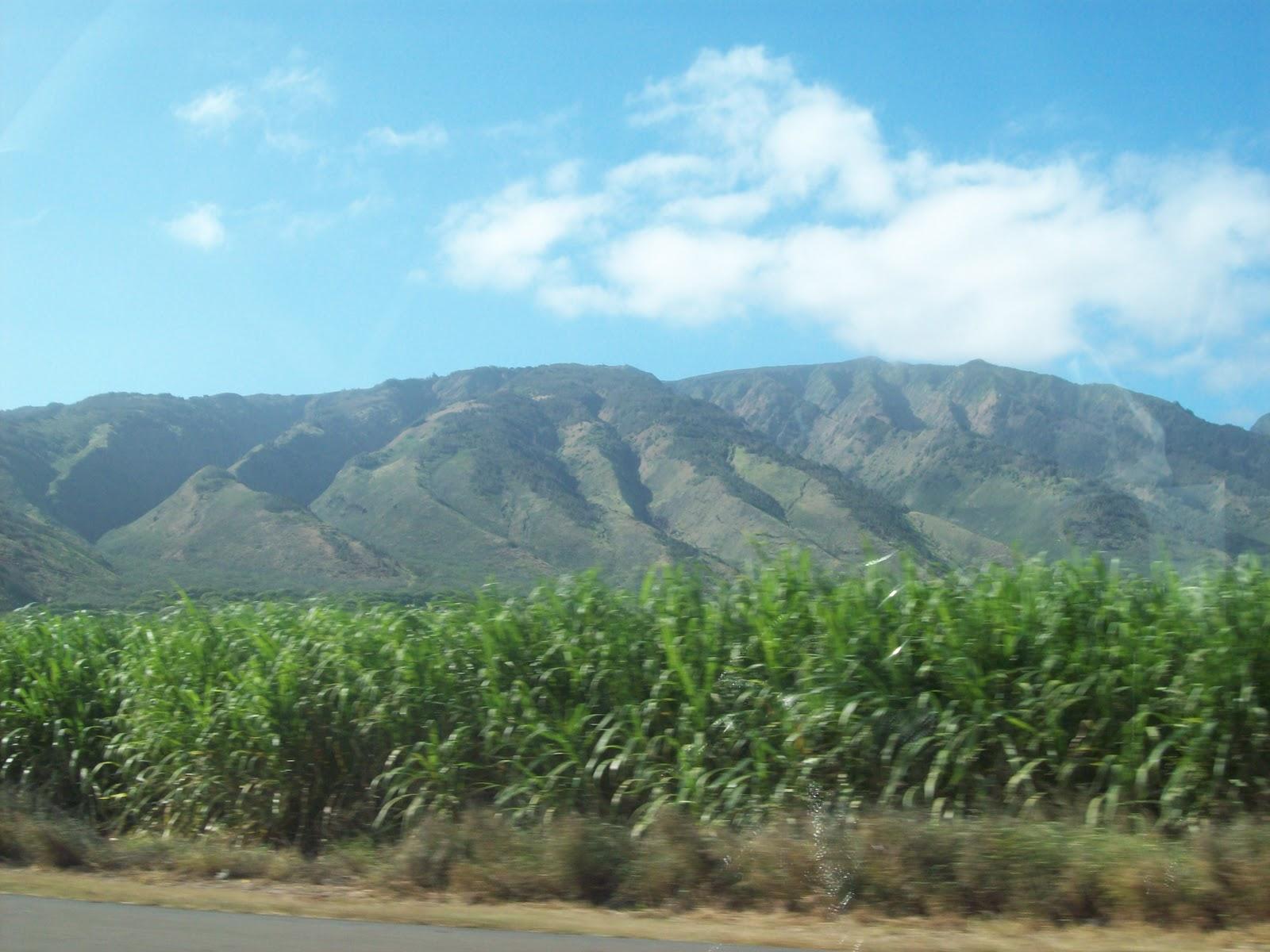 Hawaii Day 5 - 114_1637.JPG